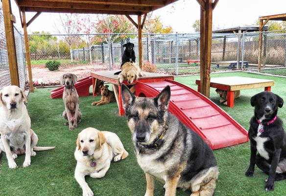Image result for dog daycare