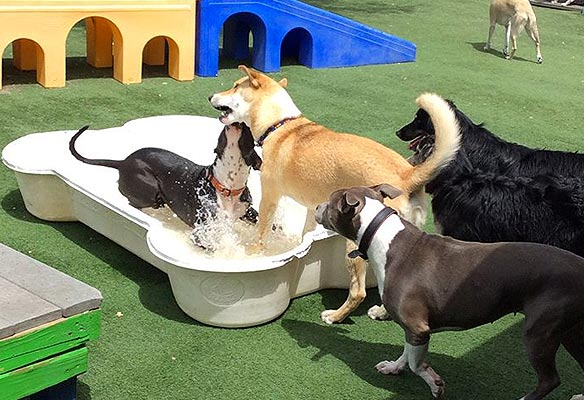 dog-playing-pool.jpg