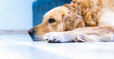 Kennel Cough and Your Pet: What You Need to Know