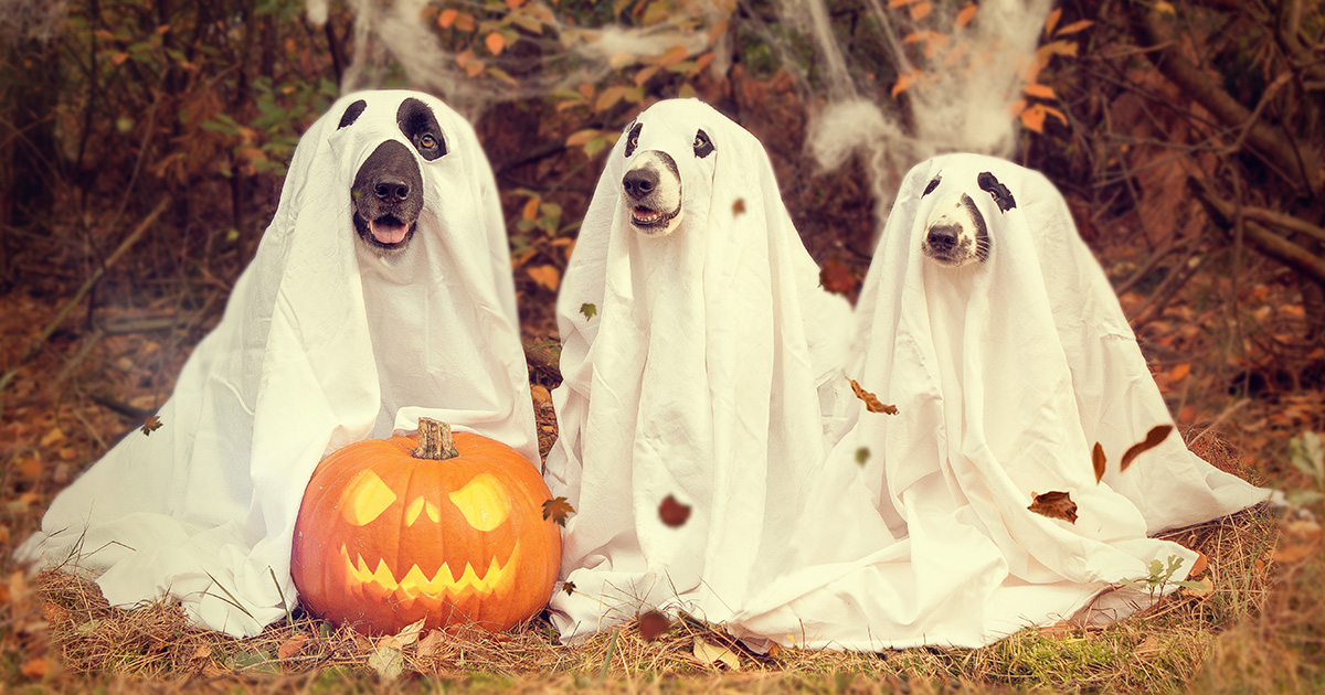 5 Essential Halloween Safety Tips for Your Pet