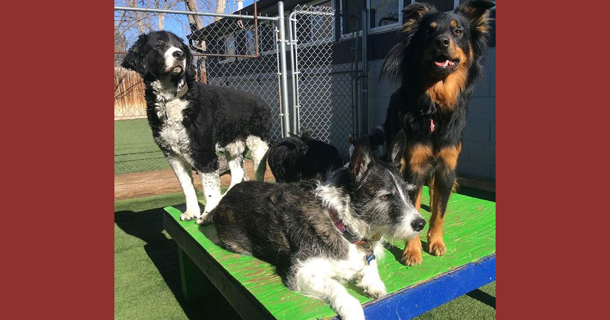 Daycare for Dogs: More Than Just Exercise