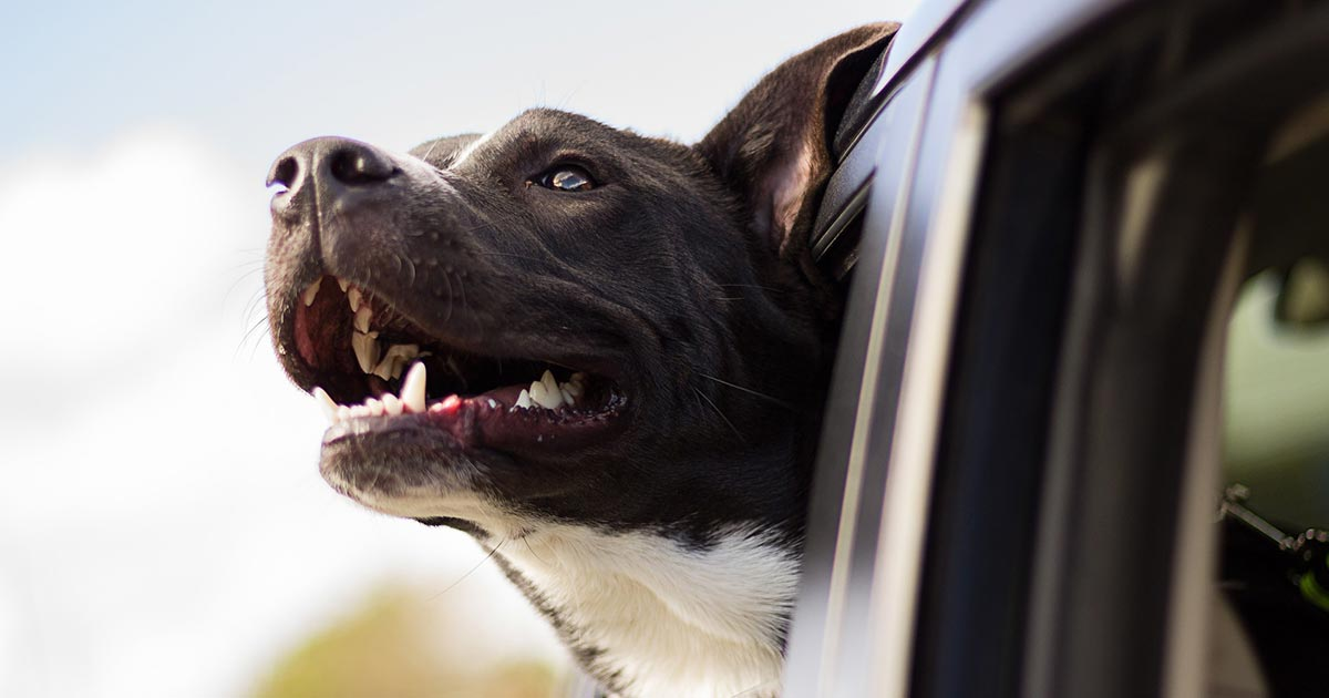 4 Quick Car Safety Tips For Dogs