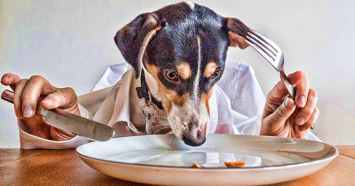 Pet Trend Watch: Homemade Dog Food