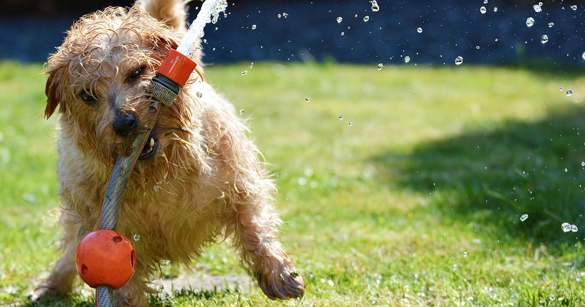 Why Organic Lawn Care is the Best Option for Your Pet